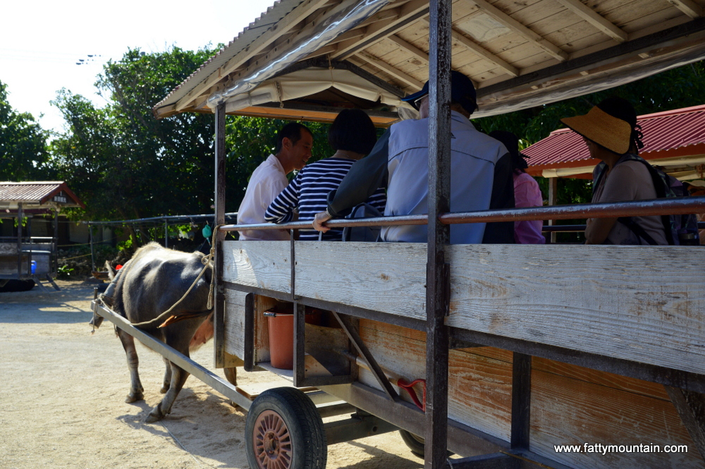 Water Buffalo Cart Rides